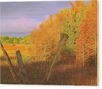 Wood Print featuring the photograph Florida Wetlands  by David Mckinney