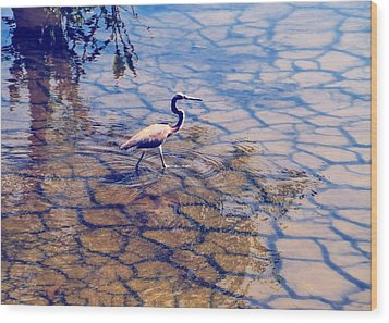 Wood Print featuring the photograph Florida Wetlands Wading Heron by David Mckinney