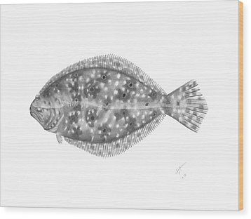 Flounder - Scientific Wood Print
