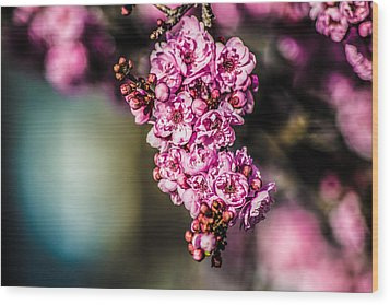 Wood Print featuring the photograph Flourishing In Pink by Naomi Burgess