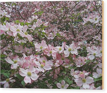 Flourishing Pink Magnolias Wood Print by Deborah Montana