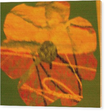 Flower 1 Wood Print by Dorothy Rafferty