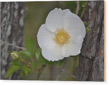 Flower And Bark Wood Print