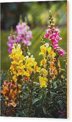 Flower - Antirrhinum - Grace Wood Print by Mike Savad