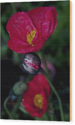 Wood Print featuring the photograph Flower Bud by Haleh Mahbod