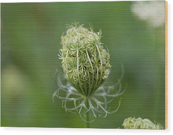 Wood Print featuring the photograph Flower Bud by John Hoey