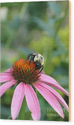 Flower Bumble Bee Wood Print by Jt PhotoDesign