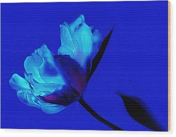 Flower Wood Print by Christine Sponchia