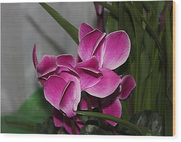 Wood Print featuring the photograph Flower by Cyril Maza
