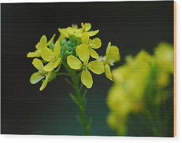 Flower Wood Print by Diaae Bakri