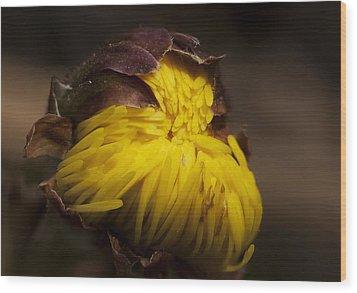Flower Dream IIi Wood Print