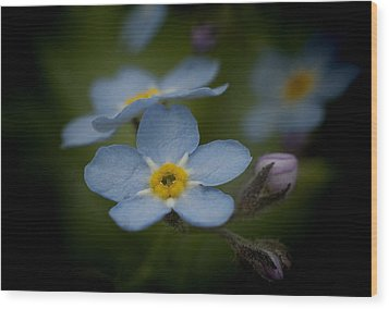 Flower Dream Iv Wood Print