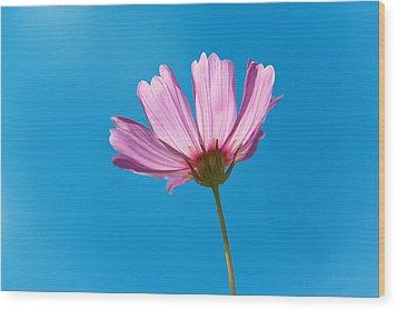 Flower - Growing Up In Philadelphia Wood Print by Mike Savad