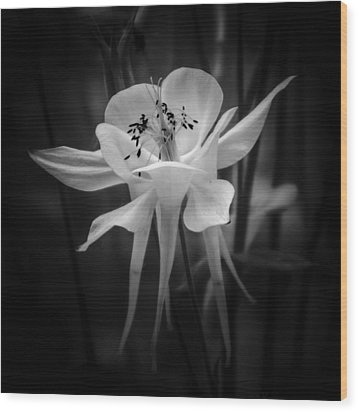 Flower In Black And White 1 Wood Print