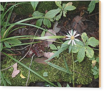 Flower In The Woods Wood Print