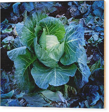 Flower Wood Print by Julian Cook