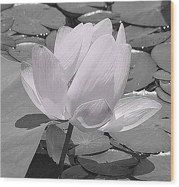 Flower Lilly Pad Wood Print by Steve Archbold