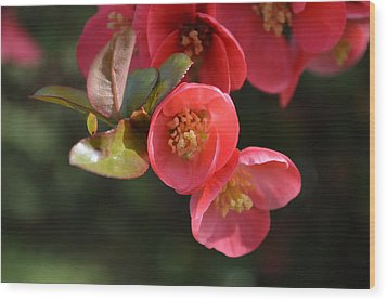 Flower Love Wood Print by Sheldon Blackwell