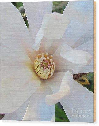 Flower Magnolia White Wood Print by Joyce Woodhouse