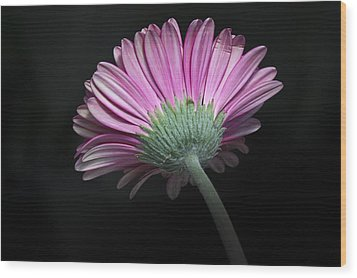 Wood Print featuring the photograph Flower by Nick Mares