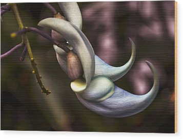 Flower Of A Jade Vine Wood Print by Julie Palencia