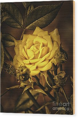 Flower Of Friendship  ... Wood Print