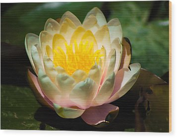 Flower On A Lilly Pad Wood Print