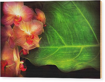 Flower - Orchid - Phalaenopsis Orchids At Rest Wood Print by Mike Savad