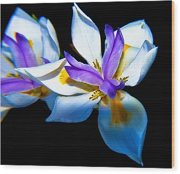 Wood Print featuring the photograph Flower Power by Joseph Hollingsworth
