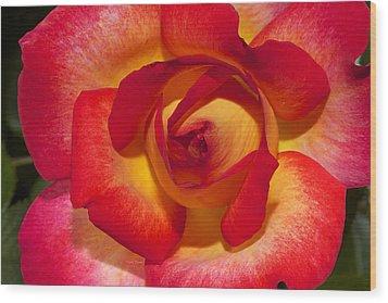 Flower Power Wood Print by Phyllis Denton