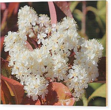 Flower Puffs Wood Print by Kume Bryant