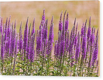 Flower - Speedwell Figwort Family - I Dream Of Lavender  Wood Print by Mike Savad