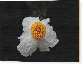 Flower Sunny Side Up Wood Print