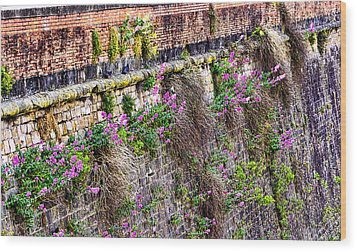 Flower Wall Along The Arno River- Florence Italy Wood Print by Jon Berghoff