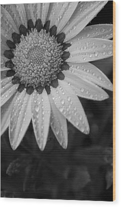 Flower Water Droplets Wood Print