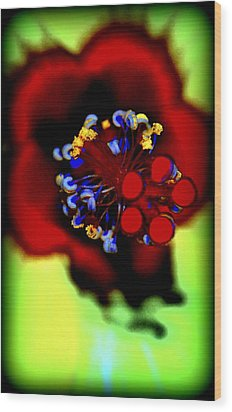 Flower With'in Wood Print by Kathy Sampson