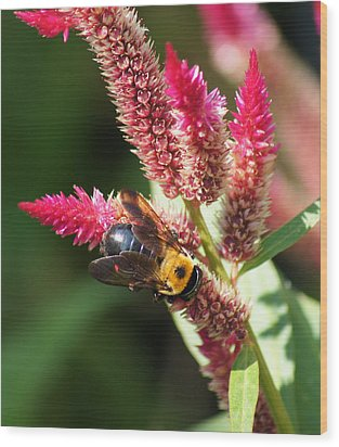 Wood Print featuring the photograph Flowering Bumble Bee by B Wayne Mullins