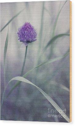 Flowering Chive Wood Print by Priska Wettstein