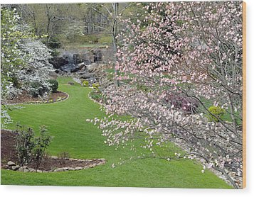 Flowering Dogwoods In Cleveland Park's Rock Quarry Falls  Wood Print