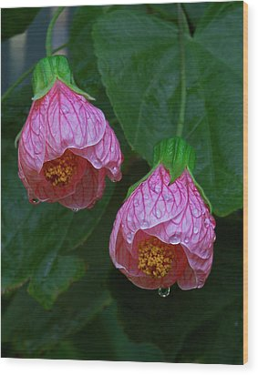 Flowering Maple Wood Print