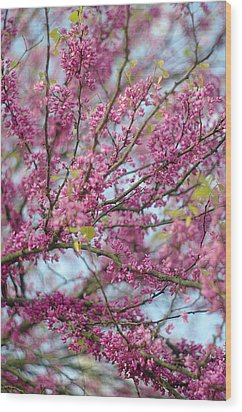 Wood Print featuring the photograph Flowering Redbud Tree by Suzanne Powers