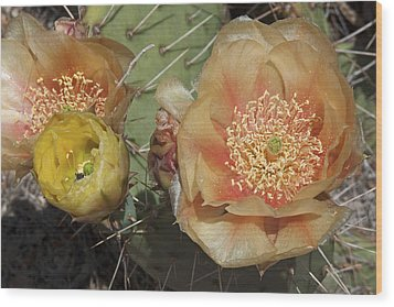 Flowering Prickly Pear Wood Print