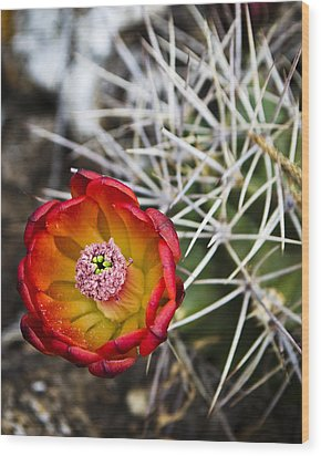 Blooming Texas Cactus Wood Print