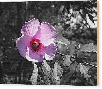 Flowering Wood Print by Tom DiFrancesca