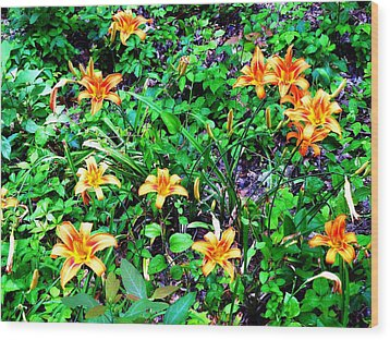 Flowers 2 Wood Print by Dietrich ralph  Katz