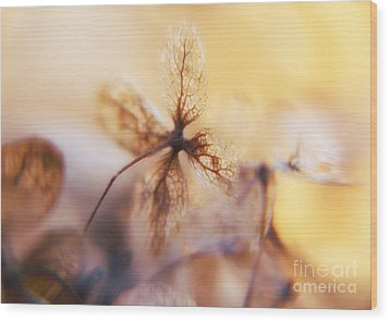 Flowers 3 Wood Print by Justyna JBJart