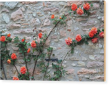 Wood Print featuring the photograph Flowers 5-assisi by Theresa Ramos-DuVon