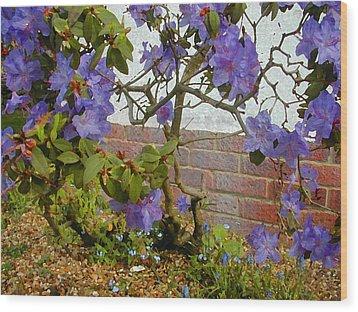 Flowers Against The Wall Wood Print by Lenore Senior and Constance Widen