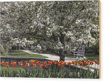 Flowers And Bench At Michigan State University  Wood Print by John McGraw