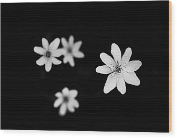 Flowers In Black Wood Print